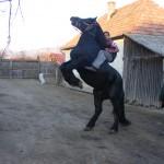 Kezdiszentlélek - ló